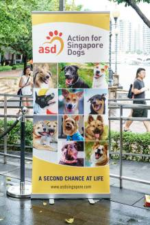 Action-for-Singapore-Dogs-Adoption-Drive