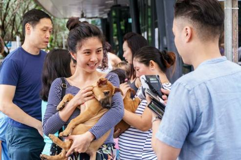 Adopt-puppy-Singapore