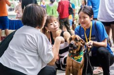 Adopting-a-dog-in-Singapore