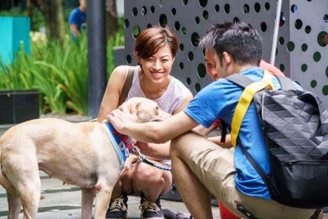 Dog-Adopt
