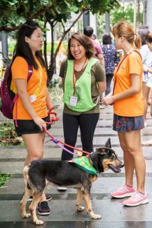 How-to-adopt-a-puppy-in-Singapore
