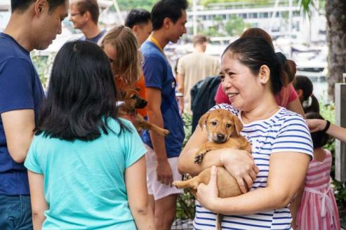 How-to-adopt-puppies-Singapore