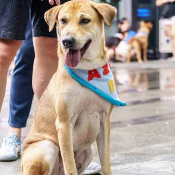 Procedures-to-adopt-a-dog-in-Singapore